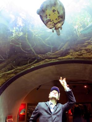 At the California Academy of Sciences, reaching up to sea turtle.